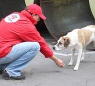 """DMS LAPI – кампания на Фондация """"Четири лапи"""" за лечение и кастрация на бездомни животни"""