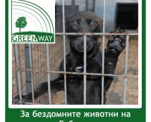 """DMS LAPA – Kампания """"Да помогнем на бездомните животни в Габрово заедно!"""""""
