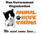 """DMS ANIMAL – Кампания """"Да подарим надежда и спасение на бездомните животни!"""""""