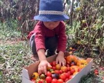 Да научим децата на България как се отглежда екологично чиста храна – DMS BOTANIKA